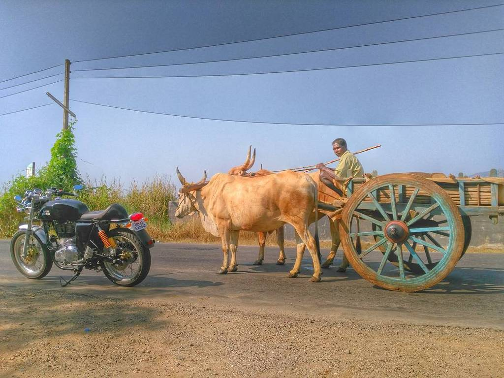 It took me 5 mins to make those cows pose... And still they didn't look at the camera! Swag. #RiderMania #CoastalRi… https://t.co/x6UenCEiGw