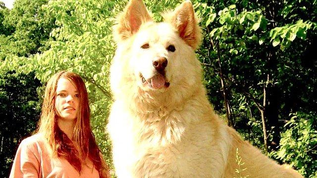 犬は断然、大きい方がいい!という人のための大型すぎる大型犬写真その3 14枚 https://t.co/hh7BGTo5Qk https://t.co/x94fJxa85U