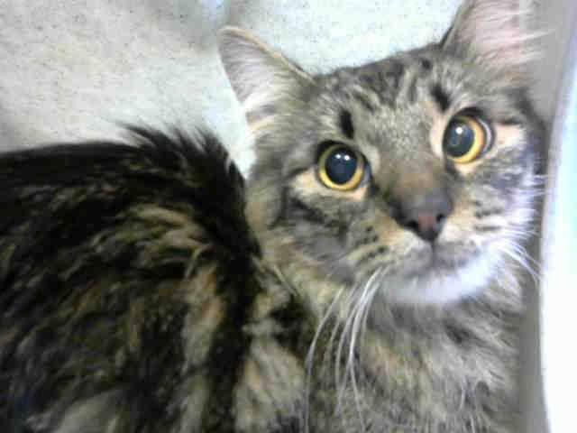 @BeepBeepKittey San Bernardino #CA URGENT #kitty lil over 1yo,RESCUE ONLY, Fairchild  scared https://t.co/ANa9tDzgnq https://t.co/e5vog1H0Cm