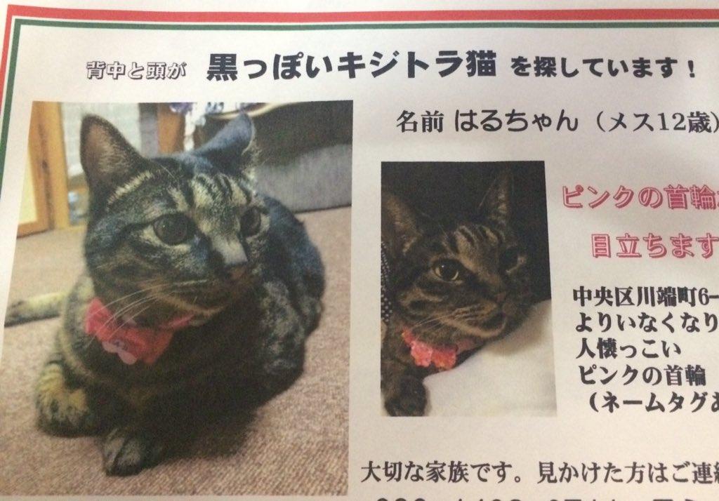 川端町6丁目から猫がいなくなったと。ご近所の方見かけたらご連絡ください。。  #迷い猫 https://t.co/uEvtQOoPqT