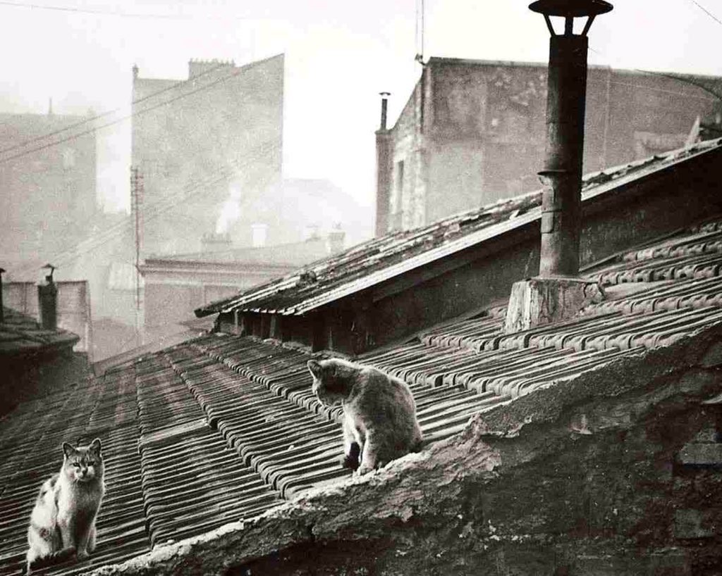 Édouard Boubat / Cats on a roof in Paris (1947) - https://t.co/4t2OqKZuPt / via @stjohnsphoto