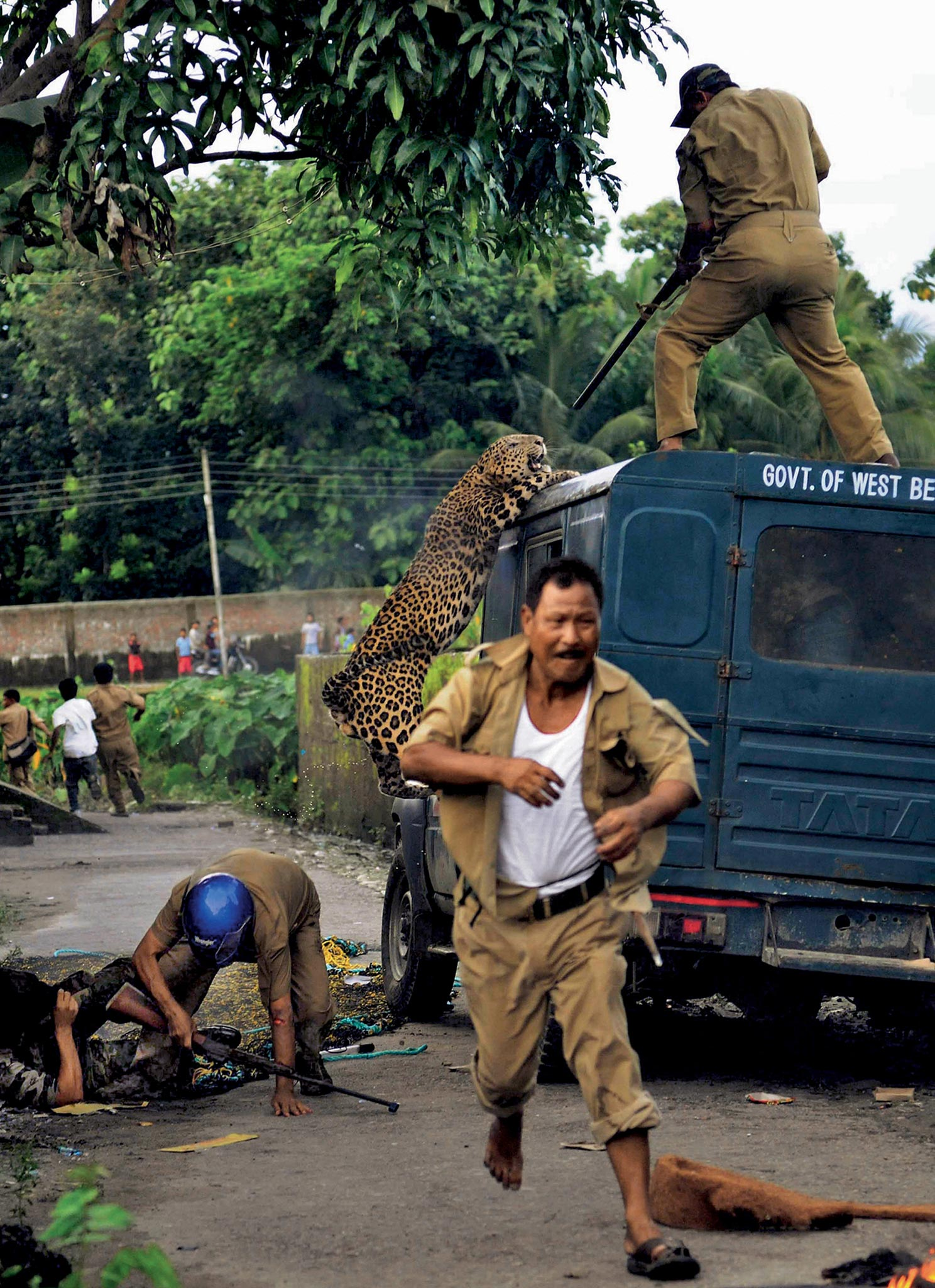 Forest guards grapple with the chaos of a leopard attack in West Bengal, India https://t.co/3QcYwPoSZj