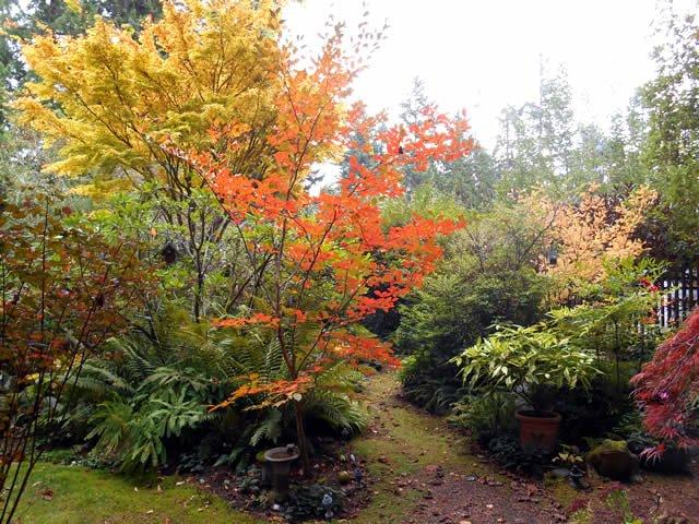 Don't you just love a fall garden? More ->https://t.co/IeqvOLY6uk #FGgpod #gardening https://t.co/GMPigc8YnZ