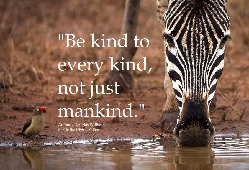Happy #WorldKindnessDay!  A nice moment to think about how we can be more kind to ourselves and our planet. https://t.co/kr6iIB4khY