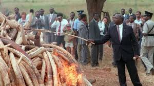 So this is Moi burning ivory while holding his legendary rungu made of ivory. What bullshit were we being fed