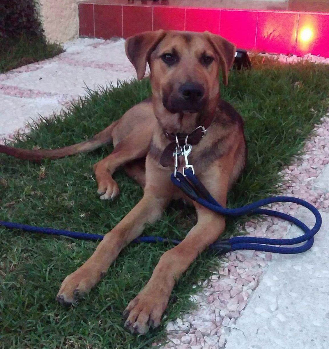Perrito rescatado en adopcion... sus RTs son apreciados! https://t.co/WPftkVF7A6
