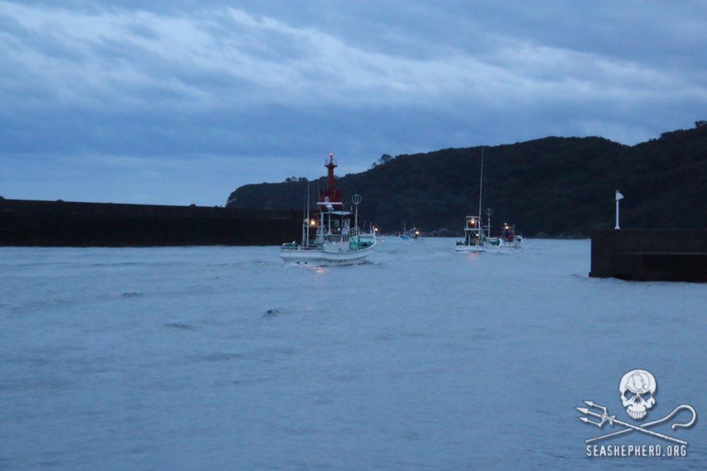 RT @CoveGuardians: 0615am: 12 boats set out to hunt. #tweet4taiji https://t.co/tLcfrqvagu