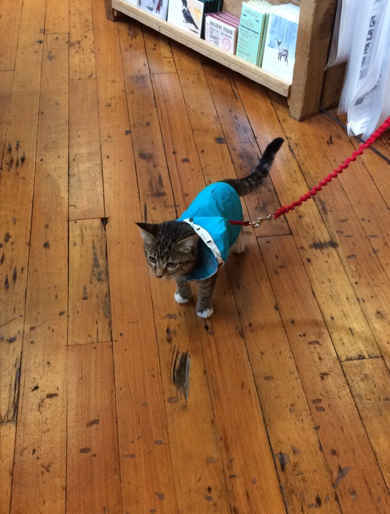 Important News: this is a cat on a leash wearing a shark raincoat. Her name is Jupiter, and she's 4 1/2 months old. https://t.co/ToClyRQACS