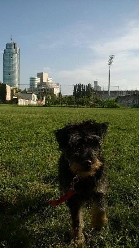Izgubljen mali crni pas, ženka lovni terijer, Zagreb, nagrada nalazniku. https://t.co/vZMPU0SODH https://t.co/uHLKO3VJj7