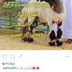 صورة / خروف «فحل» يصل سعره في الكويت الى 65 ألف دينار ! https://t.co/ULiJ1fO4zk