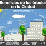 Beneficios de los árboles en la ciudad, buena imagen que lo resume :D https://t.co/EwxHUnnSCp