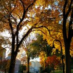 A look at some of our favorite fall #PennState photos this year. https://t.co/KNEVt6eXrk