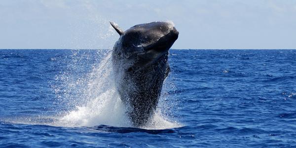 We are appalled at Japan's decision to resume cruel whaling program in the Antarctic Ocean https://t.co/FaskpxLziQ https://t.co/E7FyZllQaJ