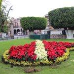 #SabíasQue se plantarán 9 mil flores de nochebuenas en las diferentes áreas verdes de #Morelia. ¡Vamos a cuidarlas! https://t.co/gkk4FFmxK8