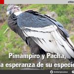 Pimampiro y Pacha, la esperanza de su especie- #Ecuador https://t.co/ijGqB3YWPM https://t.co/YvdOCdFVFB