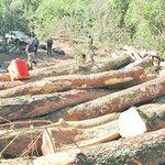 En un mes fueron depredadas 58.000 hectáreas de bosque o tierras forestales https://t.co/lZrHnsZvSr https://t.co/UZtWK0095a