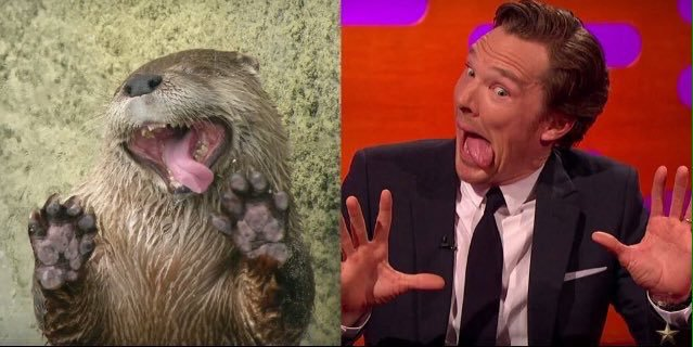 #JohnnyDepp, #BenedictCumberbatch and @GrahNort recreate some classic otter pics #TheGNShow https://t.co/px5KfuE1R3