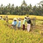 Segenggam beras sesuap makanan adalah hasil penat lelah & jerih perit para petani hargailah mereka #HPPNKSamarahan https://t.co/YMpFhiW1mR