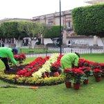 La Secretaría de @ServPublicosM inició hoy la colocación de nochebuenas en jardines del centro de #Morelia. https://t.co/7SRnEsFXE2