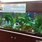 dalam gambar nampak cantik, tengok real live lagi cantik.Pameran Tumbuhan Akuatik hanya di #HPPNKSamarahan .. Jom! https://t.co/ivCCQxRKPN