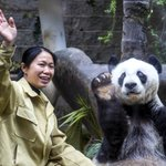 Panda gigante acena para visitantes durante seu aniversário na China ???? ❤ https://t.co/CL7v9u0zb4 #G1 https://t.co/PcHl8YczPd