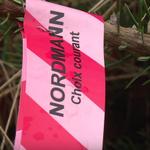 Noël: la Bretagne, eldorado méconnu des sapins nordmann https://t.co/LTeLSS633y #AFP https://t.co/udp5OHFbGs