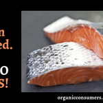 RT! #GMO salmon has been approved... and it will NOT be labeled! https://t.co/XHp2n1OGxW #LabelGMOs @NYTimes https://t.co/UWGuxys68i