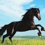 No hay triunfo sin renuncia, victoria sin sufrimiento, libertad sin sacrificio. #horse https://t.co/PFKVZUmgO9 https://t.co/XuojhBJ4B0