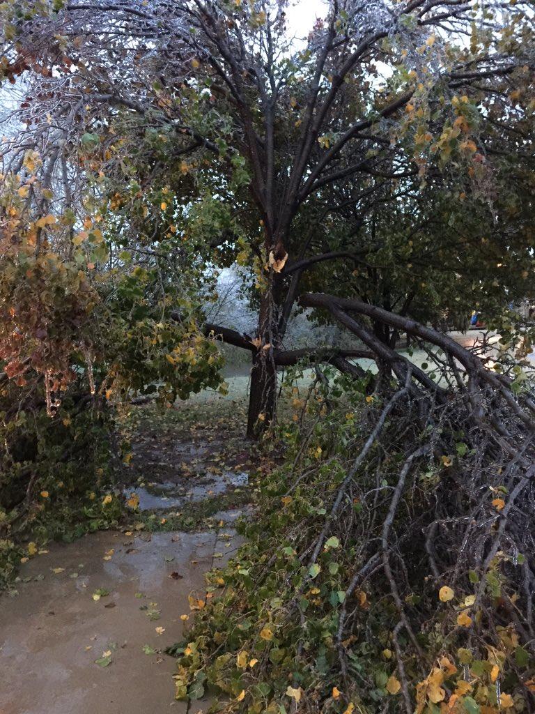 @news9 Trees falling in Bridgewater/Edmond