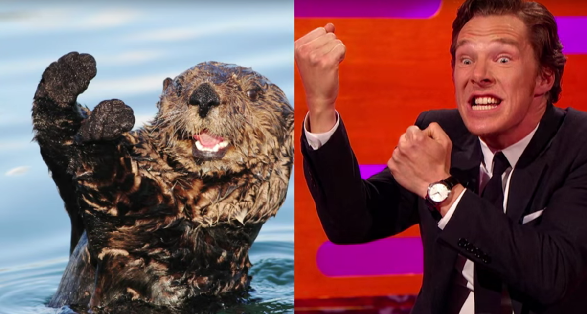 Watch Benedict Cumberbatch impersonate otters with Johnny Depp. Yes, really.