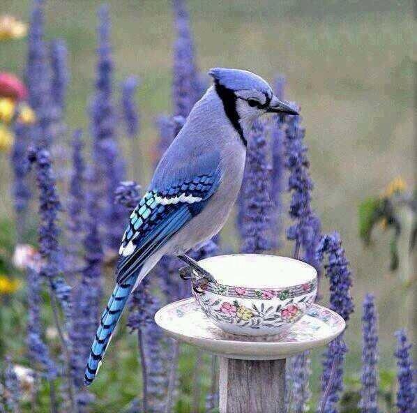 جمال الطيور . https://t.co/E63w1RwD7o