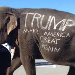 Elephant trumpets Trumps arrival in Florida https://t.co/iQ6Pg7TBYv https://t.co/nDMUtUUxnP