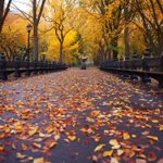 RT https://t.co/FixEZ1QRHW takako4442: RT Piclogy: Fall in Central Park, #NYC   Photography by ©Chris Ford https://t.co/8jm9Z6SmXc