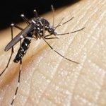 El virus de zika sigue propagándose en América Latina » https://t.co/MRWZ6WS8if https://t.co/Sy3xAyH3qv