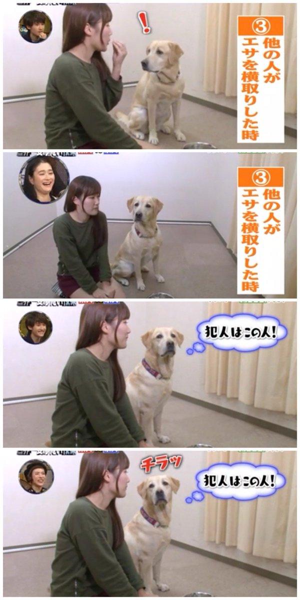 世界一受けたい授業でやってた「他の人が餌を横取り。自分じゃないよって犯人と飼い主を交互に見る犬」なんか見たことあるなって思ったら。錦戸さんがいっぱい食べたのにお前どんだけ食ってんねんって横山さんに怒られ、錦戸横山交互に見る大倉さん… https://t.co/Rft8ewztNO