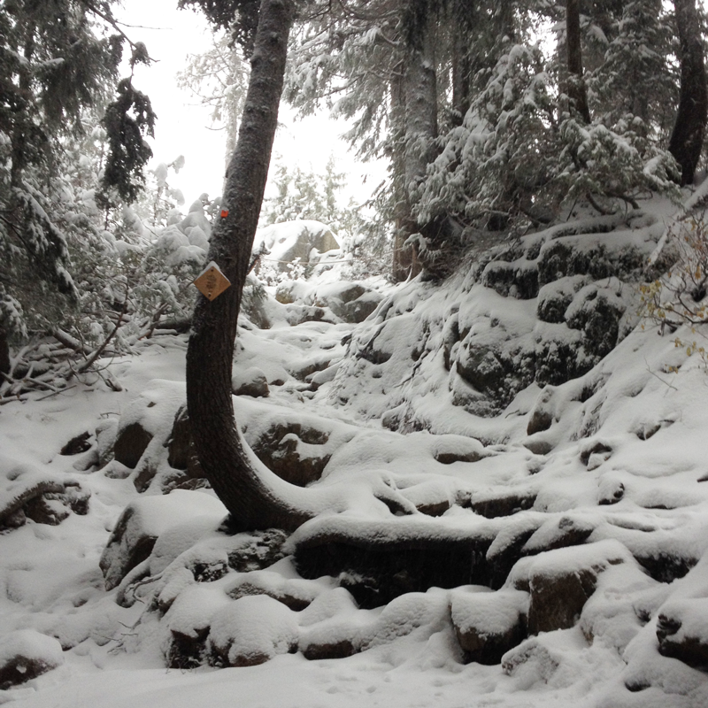Photo shows upper #GrouseGrind trail covered in snow. Trail is now closed for the winter. @grousemountain https://t.co/qlw0PHPWRt
