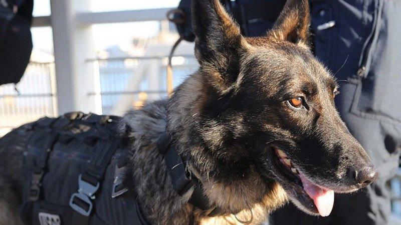 Un chien policier tué ce matin durant l'assaut à Saint-Denis https://t.co/K2m2mLTTgb https://t.co/CRGzA33cGo