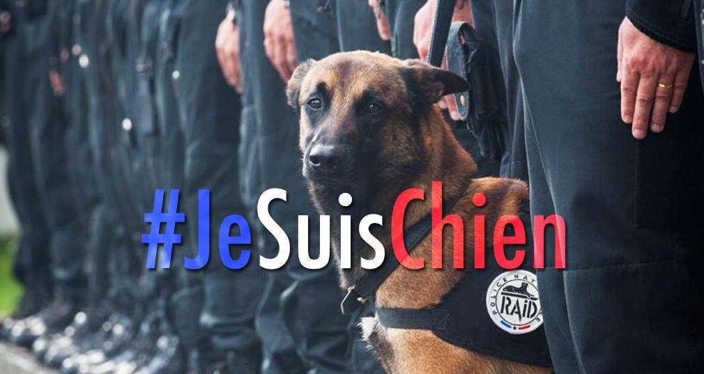 #JeSuisChien: las redes sociales rinden homenaje al perro policía muerto https://t.co/Um0VPhEf6W https://t.co/tvjBLP3njK
