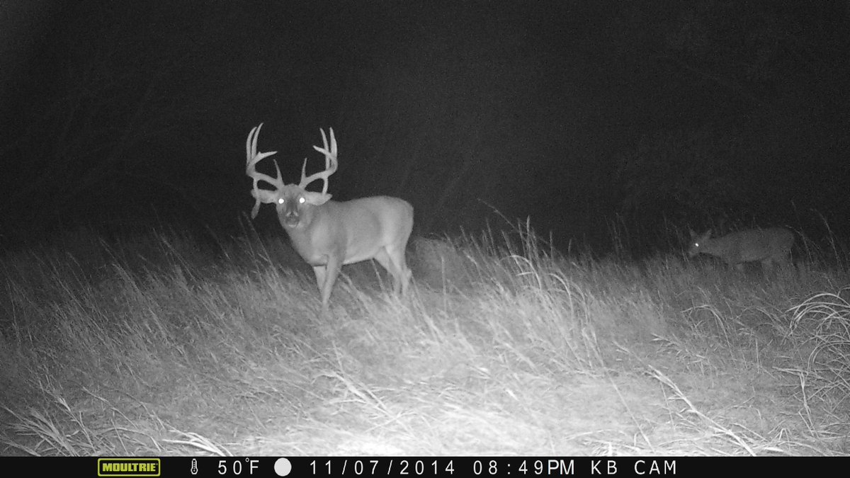 Here are 5 ways that a mature buck will predict his favored travel routes -->  https://t.co/QOLtyzafOf https://t.co/mqeUyOz0T4