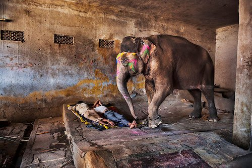 """Just beautiful images. """"Steve McCurry's India"""" https://t.co/FJL7HRdwyX https://t.co/gz9IJoOAcY"""
