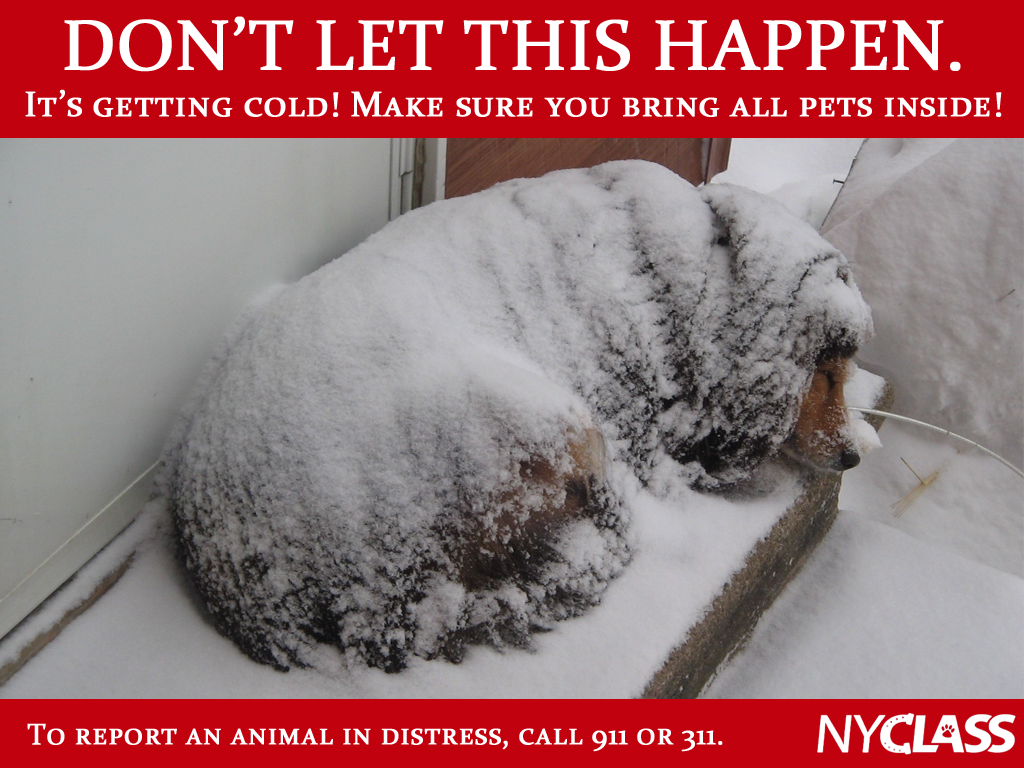 If it's too cold for you, it's too cold for them. Bring pets inside & report animals in distress to 911 or 311. https://t.co/X8Xge8w21o