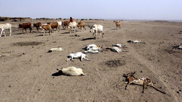 It's a 'code red' drought year in #Ethiopia: https://t.co/koJ0JRZ0Es  @SavetheChildren #COP21 https://t.co/WoPUcbkJDp