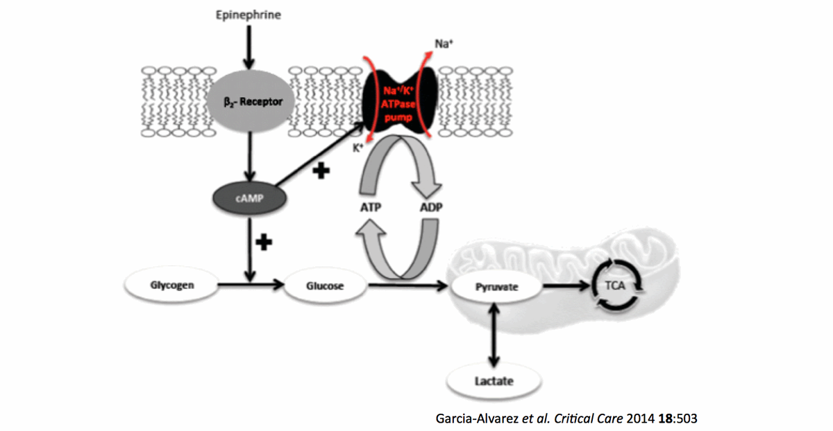 Understanding lactate in sepsis & Using it to ouradvantage https://t.co/FBPu4NzdRF https://t.co/1SP0GRH9fU