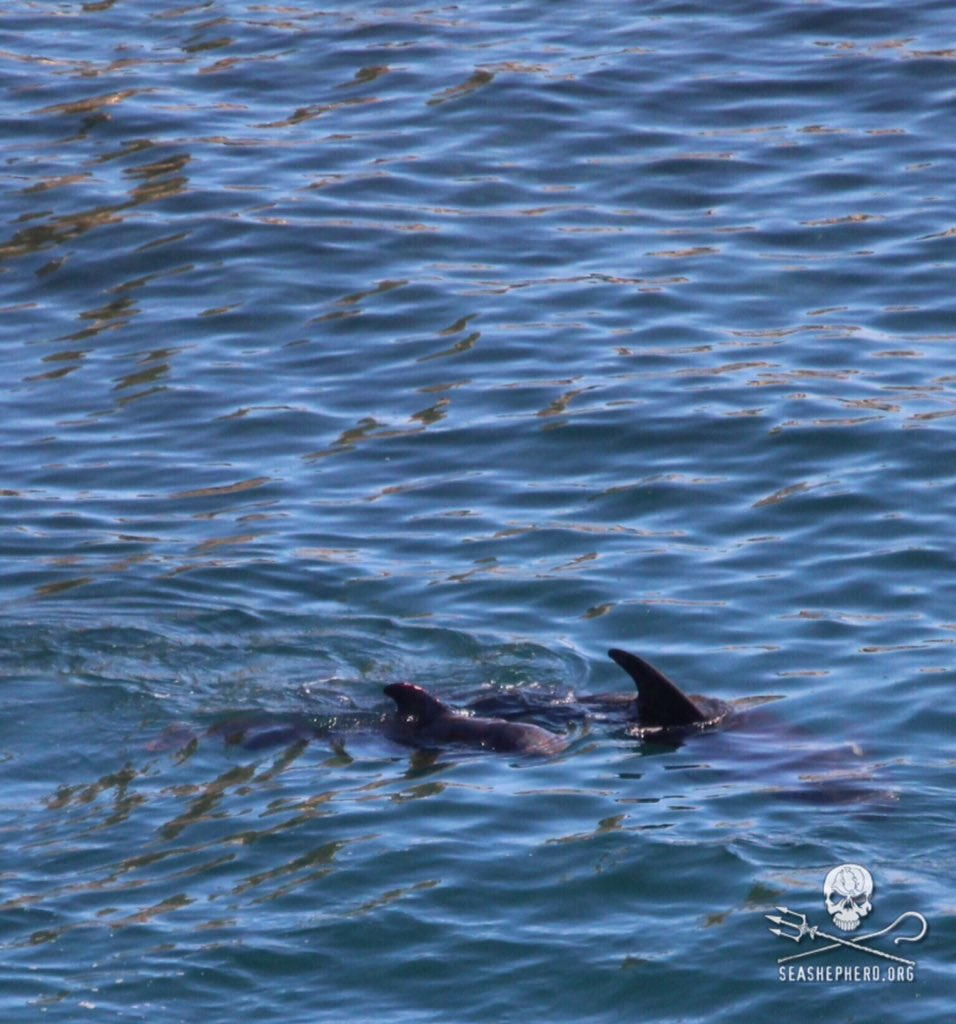 RT @CoveGuardians: 0915am: Wounds can be seen on those still held in the cove; transfer of bodies continues around them. #tweet4taiji https…