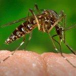 Recife e Pernambuco decretam estado de emergência devido ao mosquito da dengue https://t.co/78LLcD9S4e #G1 https://t.co/gAnme1C1yR