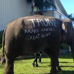 .@realDonaldTrump campaign stop features an actual elephant https://t.co/odY3k0d2bY https://t.co/iOK3v03Nir
