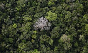 RT @AmazonWatch: 1/2 tree species in Amazon at risk of extinction https://t.co/yqJNng5F3h What have Amazon trees ever done 4 anyone? https:…