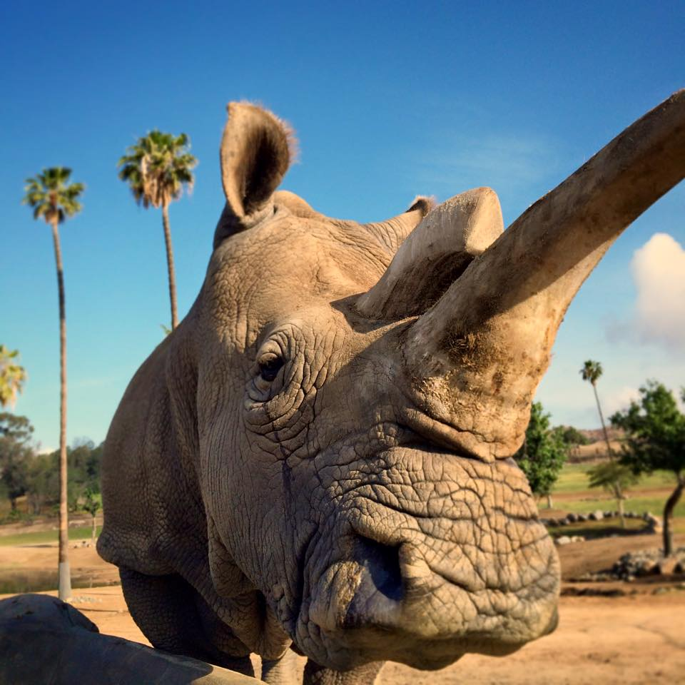 Thank you all for your condolences. Honor Nola by sharing her story w/ #Nola4Ever. Please re-tweet. #EndExtinction https://t.co/M2FAa7DHX5