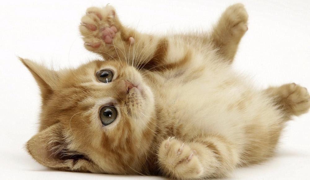 les belges tweet des photos de chats pour ne pas donner des infos aux terroristes catseyes. Black Bedroom Furniture Sets. Home Design Ideas