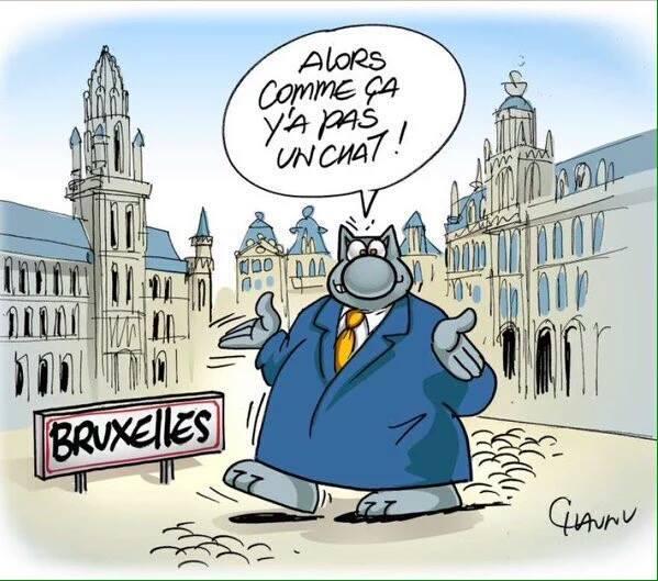 Et comment Chat va en Belgique ? https://t.co/Comd8UQl0P